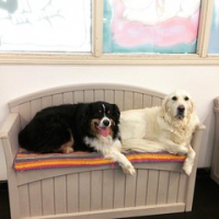 "Long time BFFs, Cooper Sambo and Pearl Gaither take a break from their busy day. #happydogs #sillydogs #dogtiredak #BFF • <a style=""font-size:0.8em;"" href=""http://www.flickr.com/photos/98807890@N02/19667673632/"" target=""_blank"">View on Flickr</a>"