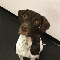 "Welcome Tarn Becia to Layla's Lounge. So much fun is waiting for you! #dogtiredak #happydog #gsp #gspofinstagram • <a style=""font-size:0.8em;"" href=""http://www.flickr.com/photos/98807890@N02/29966501100/"" target=""_blank"">View on Flickr</a>"