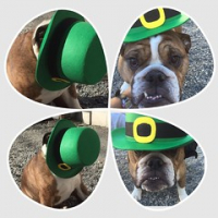 "Happy St. Patrick's Day from our English bully, Tank Banks. #squishyfacecrew #bulldogsrule #dogtiredak #dogsofinstagram • <a style=""font-size:0.8em;"" href=""http://www.flickr.com/photos/98807890@N02/16823100346/"" target=""_blank"">View on Flickr</a>"