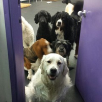 "Another event we competed in, gate boundary, asks the group of dogs to wait at an open door before being released to recess. @dogtireddaycare @iloveanchorage @momentsofnorm #liveworkplay #anchorage #daycaregames #alaska #dogsofinstagram #dogtiredak • <a style=""font-size:0.8em;"" href=""http://www.flickr.com/photos/98807890@N02/16805453912/"" target=""_blank"">View on Flickr</a>"