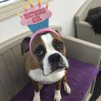 "Happy 8th Birthday Maggie! Best. Boxer. Ever! #squishyfacecrew #magpie #dogtiredak #dogsofinstagram • <a style=""font-size:0.8em;"" href=""http://www.flickr.com/photos/98807890@N02/16952087978/"" target=""_blank"">View on Flickr</a>"